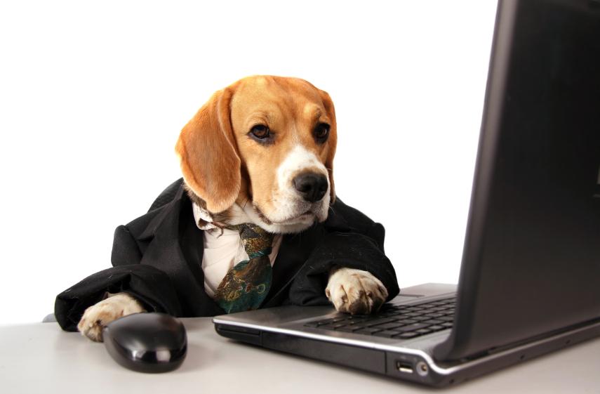 Kam in kako vključiti ključne besede za on-site optimizacijo?